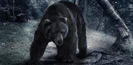 Imigrant udawał niedźwiedzia. Nielegalnie dostał się do Polski