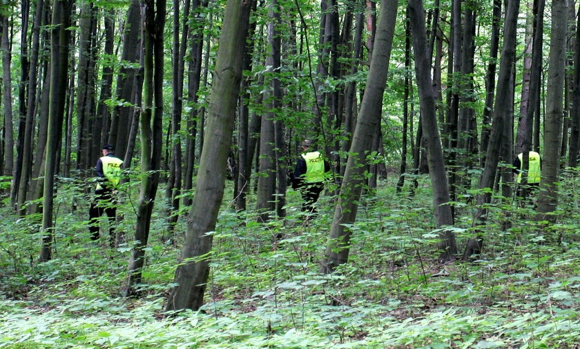 Poszukiwania w lesie
