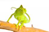 kameleon foto profimedia-0006634173