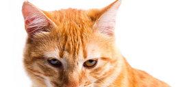 Uważaj, te przyprawy mogą zabić Twojego psa i kota