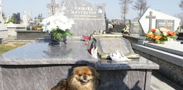 Kajtek od 2,5 roku pilnuje grobu swojego pana