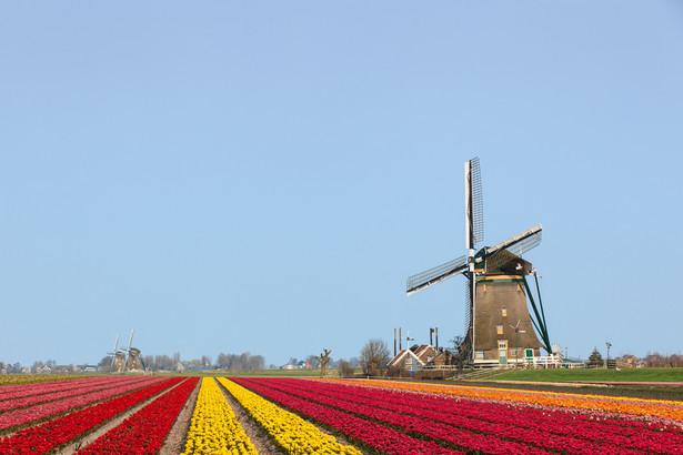 Do początku 2015 r. Polak miał możliwość wyboru opcji rozliczenia jako rezydent podatkowy w Holandii, deklarując dochód osiągnięty poza tym krajem. Holenderski US nie żądał dodatkowych dokumentów, które by potwierdzały osiągnięte poza ich granicami dochody