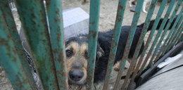 Makabra! Uśpią 600 psów pod Warszawą