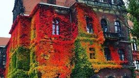 Świat zachwycony jesiennym zdjęciem z Polski