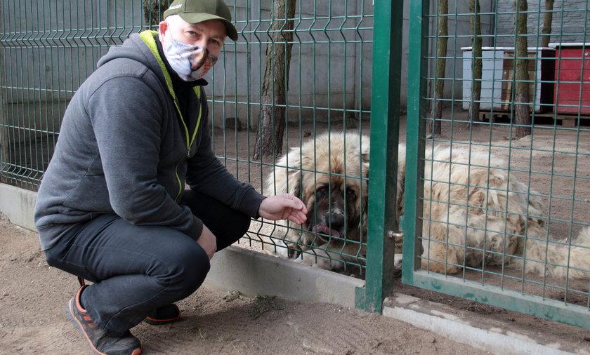 Kierownik schroniska dla zwierząt bił psy? Ktoś złożył donos