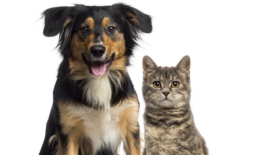 Zwierzęta domowe mogą przyczyniać się do antybiotykooporności