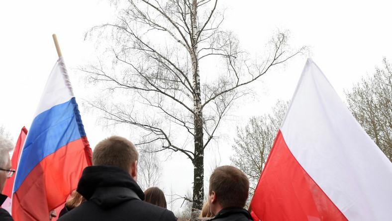 Brzoza w miejscu katastrofy polskiego samolotu rządowego pod Smoleńskiem