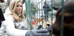 Zimowa Dżoana w schronisku dla zwierząt