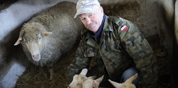 Obce owce rodzą jedno małe, a polskie aż trzy!