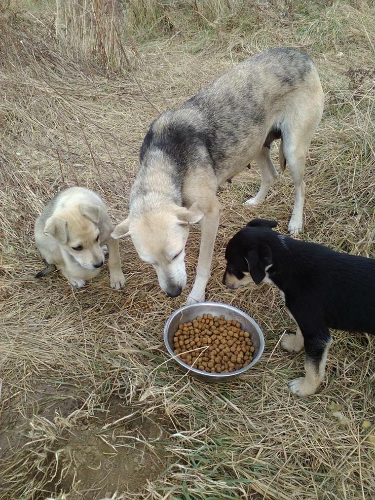Banka hrane za pse i mačke