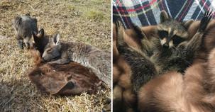 Organizácia zbiera pravé kožuchy pre zvieratá bez srsti 8ee28ad8fed