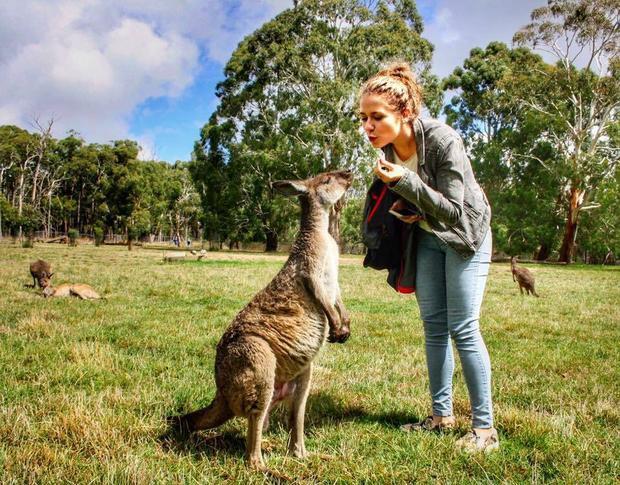 Ula w Australii