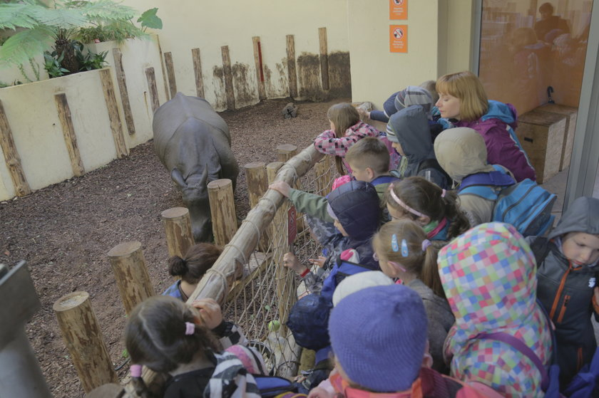 Dzieci oglądają nosorożca indyjskiego we wrocławskim zoo