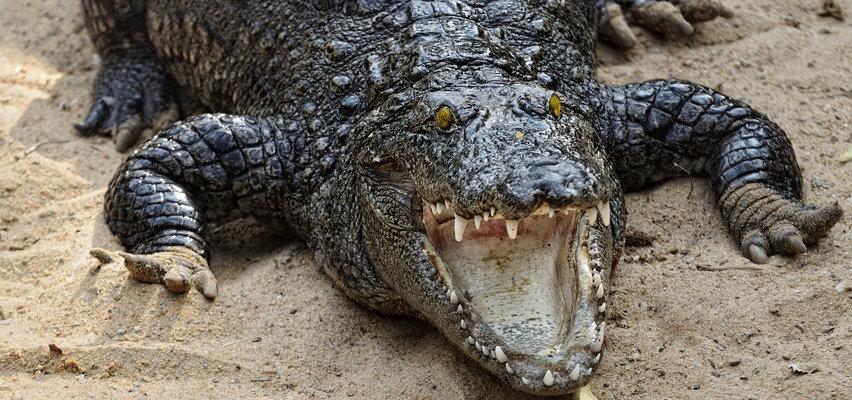 Bliźniaczki przeżyły koszmar w wakacyjnym raju. Gdy jedną z nich zaatakował krokodyl, druga zrobiła coś niesamowitego