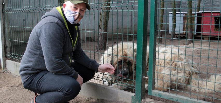 Kierownik schroniska dla zwierząt bił psy? Jest donos i reakcja
