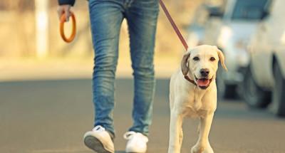 pasozyt giardia u psa objawy