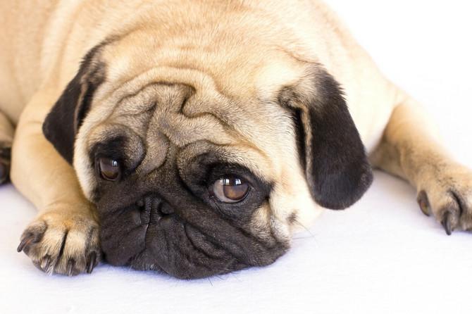 Ne dozvolite da se vaš pas boji vas