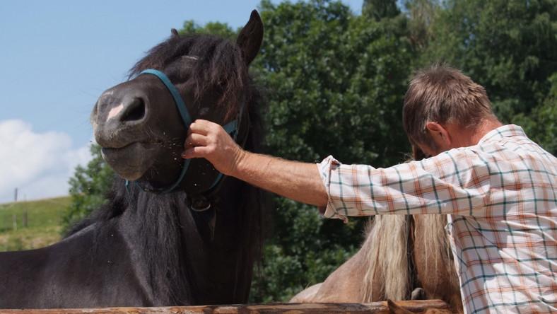 Konie są z nami od 5,5 tys. lat
