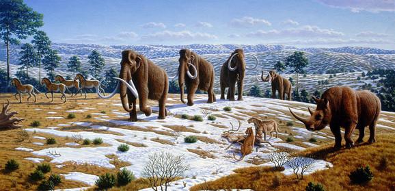 Ponovo će šetati zemljom: Mamuti izumrli pre nekoliko hiljada godina