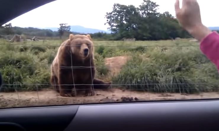 Medved uzvratio pozdrav