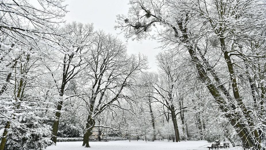 Jaka będzie zima 2021? Eksperymentalna prognoza długoterminowa