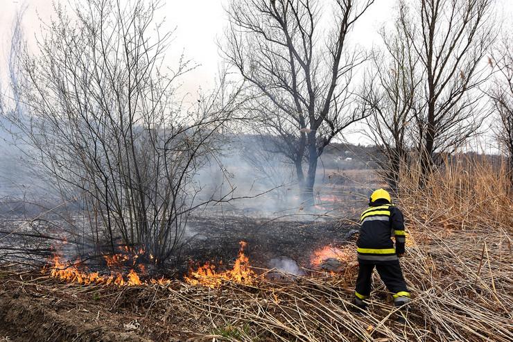 Novi Sad149 pozar Petrovaradinski rit paljenje trske