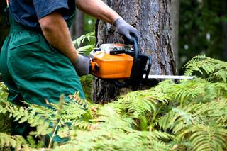 Po zmianie prawa Polacy masowo wycinają drzewa. Drwale mają pełne ręce roboty