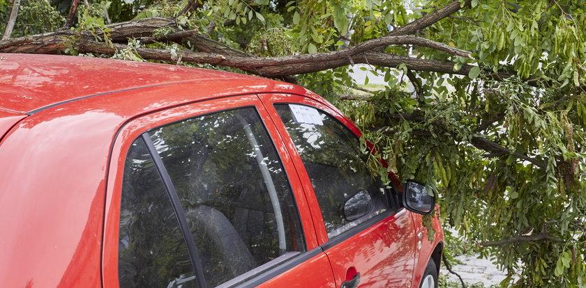Wiatr wyrządził ci szkody? Zobacz co zrobić, by dostać odszkodowanie!