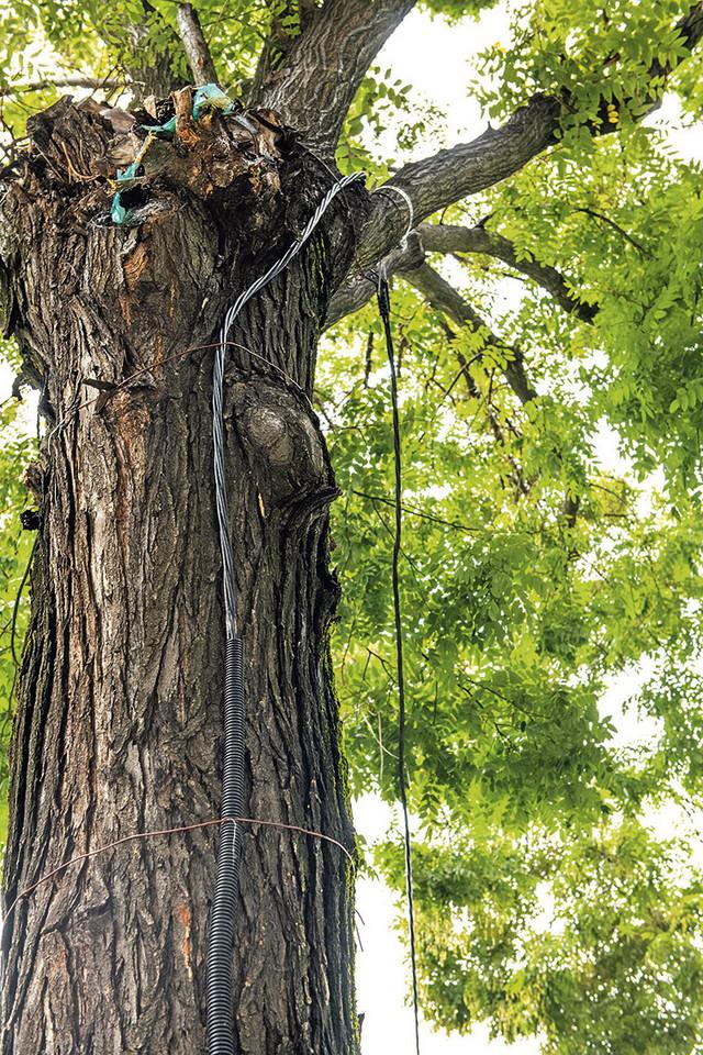 Do luksuzne nove zgrade u Zemunu investitor je struju doveo sa stuba preko stabla pa podzemnim kablom