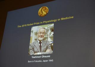 Prof. Kamińska: Noblista był pionierem ważnych badań nad autofagią