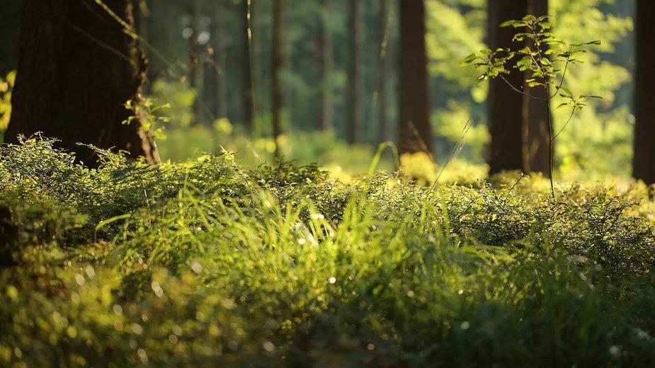Puszcza jest ogromnym siedliskiem zwierząt i roślin