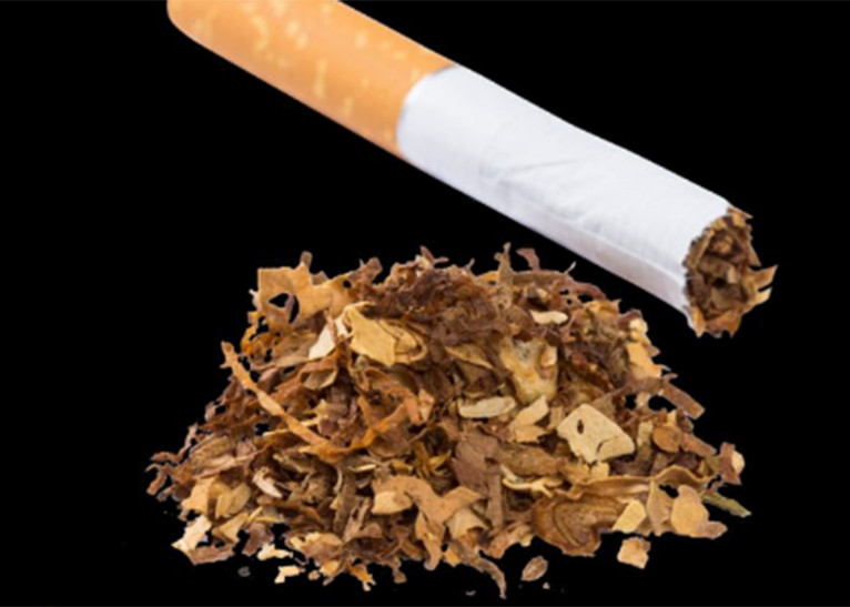 Shock as women reveal why they are applying tobacco on their private parts