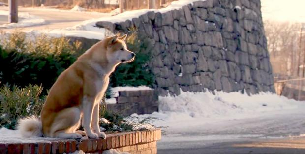 Hachiko (foto: youtube.com)