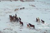 Divlji konji Livno