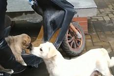 pas, oproštaj od majke