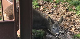 Urzędnicy kontra słynna lecznica. Spór o dzikie zwierzęta w Przemyślu
