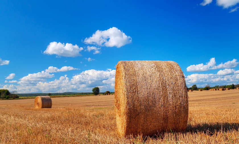Hay bales on the swedish field