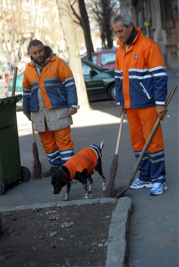 Pas Roki sa svojim vlasnikom kome pomaže u poslu