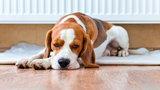 Uwaga! Wysokie mandaty dla właścicieli zwierząt! Koniecznie przeczytaj, co się zmienia
