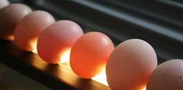 Skażone jaja! I to z ekologicznych ferm!