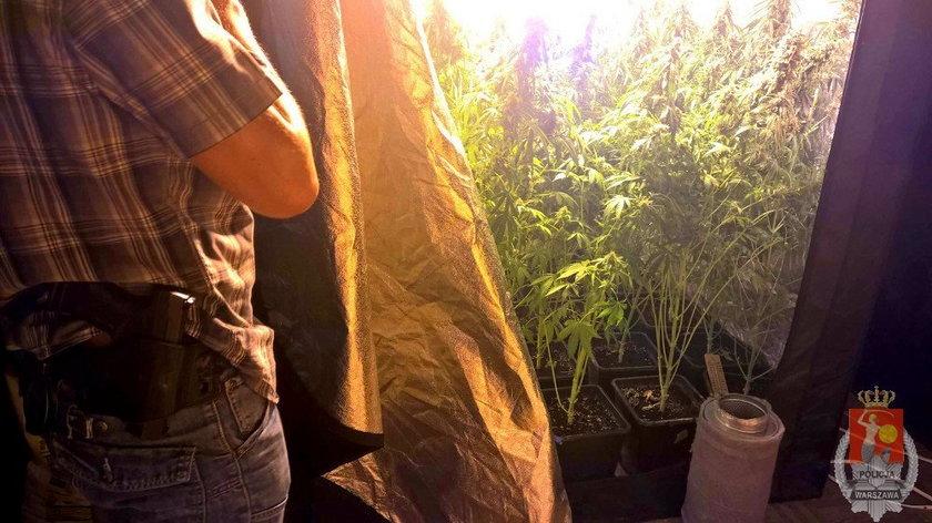 Policja zatrzymała dilerów narkotyków