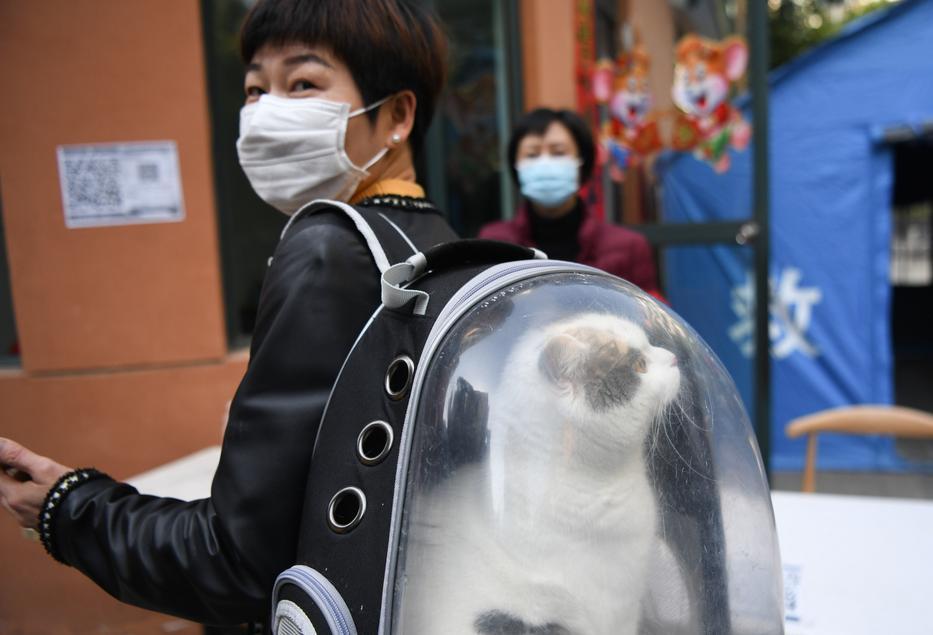 Kínában egyre jobban terjed a macskáknak készített védőtáska / Fotó: Northfoto