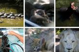 zoo vrt kombo foto O Bunic