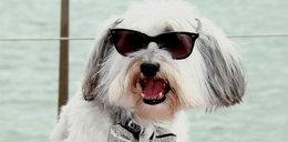 Ten pies ma na koncie 7,5 mln zł!