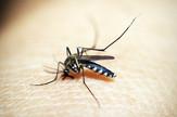 mosquitoe-1548947_960_720
