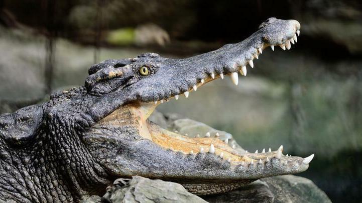 Rémálommá változott az álomutazás: kamu túravezető miatt támadt a krokodil az ikertestvérekre