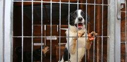 Więźniowie będą pomagać psom ze schroniska