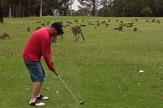 kenguri golf