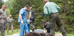 Nie żyje Eryk – najstarszy tatrzański niedźwiedź