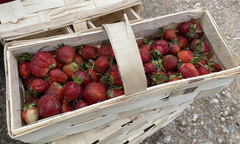 Polskie truskawki są w tym roku wyjątkowo drogie, ale spadku cen można spodziewać się po długim weekendzie.